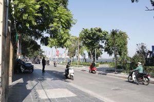 Hà Nội: Diện mạo mới của phố Trích Sài sau khi đánh chuyển 96 cây hoa sữa