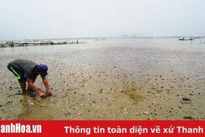 Tập trung khắc phục tình trạng ngao chết ở xã Quảng Nham