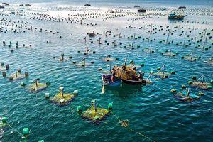 Phát triển nuôi trồng thủy sản vùng Nam Trung Bộ
