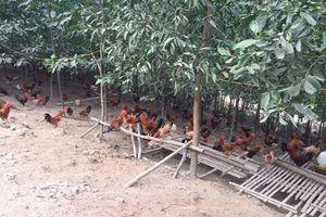 HTX Tà Lèng, Điện Biên: Cùng đồng bào dân tộc thiểu số thoát nghèo