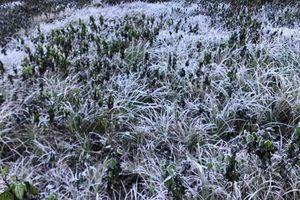Băng tuyết phủ trắng cây cối ở vùng cao Nghệ An