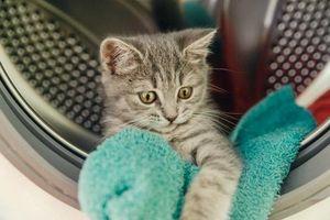 Chủ nhân 'chết điếng' khi vô tình bỏ mèo vào máy giặt 'quay' hơn 20 phút