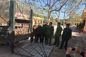 Chuyển cơ quan điều tra vụ hàng tấn thịt lợn không nguồn gốc tuồn vào Việt Nam