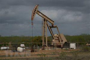 EIA: Mỹ trên đà trở thành nhà xuất khẩu ròng dầu thô trong 2020