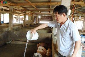 Bình Thuận sẽ đảm bảo nguồn thịt heo phục vụ thị trường Tết