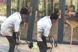 Clip chồng ở Tây Ninh thả rắn khiến vợ sợ khiếp vía sau tranh cãi