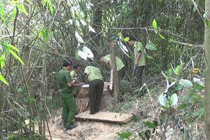 Làm rõ vụ phá rừng đặc dụng với quy mô lớn