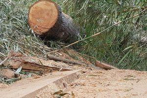 Bắt 7 nghi can phá rừng đặc dụng Nam Kar