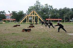 Huấn luyện và sử dụng hiệu quả động vật nghiệp vụ vào trấn áp tội phạm