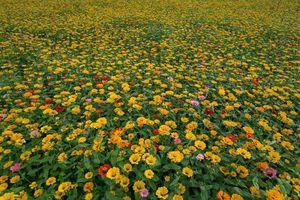 Thung lũng hoa lớn nhất Việt Nam chấm dứt hoạt động sau 2 năm.