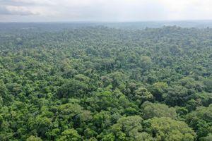 Chống biến đổi khí hậu cần đồng hành cùng bảo tồn thiên nhiên