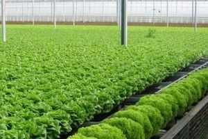 Thoái vốn tại Sky Life Farms, Sao Thái Dương chi 156 tỷ lập công ty con khác