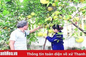 Phát triển 'nóng' cây ăn quả: Những vấn đề đặt ra