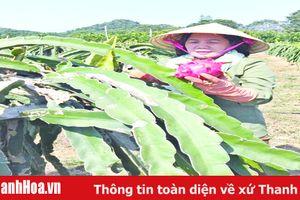 Nguyễn Thị Dung – 'Nông dân Việt Nam xuất sắc năm 2019'