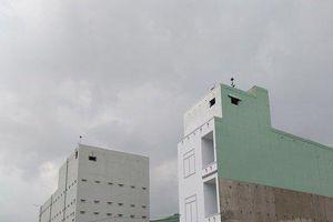 Thị xã An Nhơn (Bình Định): Người đau đầu vì chim
