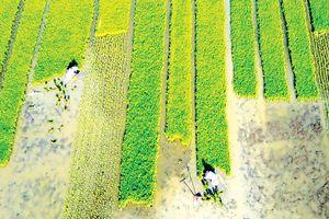 Châu Á cần 800 tỷ USD nhằm đảm bảo an ninh lương thực