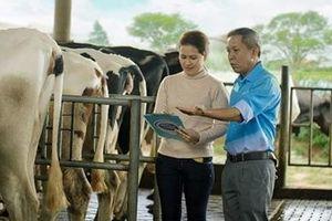 Cô Gái Hà Lan hỗ trợ nông dân hiện đại hóa quy trình nuôi bò sữa
