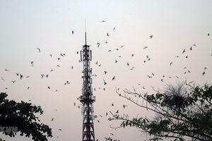 Tour du lịch gắn với thăm làng nghề nuôi chim yến tại Kiên Giang