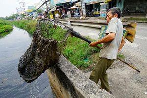 Mối nguy từ ô nhiễm hạt vi nhựa