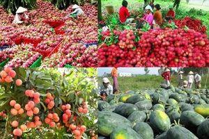 Xuất khẩu nông sản sang Trung Quốc: Doanh nghiệp cần làm gì để bền vững, tránh rủi ro?