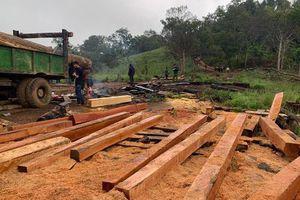 Nhiều đối tượng phá rừng giáp ranh giữa tỉnh Đắk Lắk và tỉnh Khánh Hòa bị bắt giữ