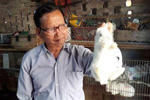 Thái Nguyên: Cụ ông nuôi thỏ thu 300 triệu đồng/năm
