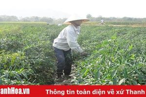 Đảng bộ xã Thăng Long chú trọng công tác phát triển đảng viên