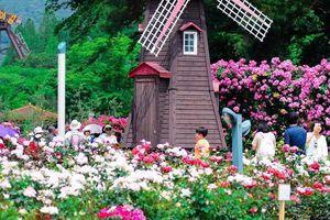 Festival hoa Đà Lạt năm 2019 hấp dẫn du khách
