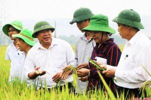 Vụ xuân 2020, Hà Tĩnh sẽ xây dựng 400ha những cánh đồng liền thửa