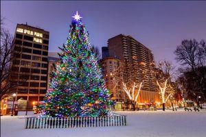 Những cây thông Noel giữ kỷ lục trên thế giới