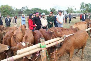 Trao tặng bò giống cho các hộ nghèo của Thanh Hóa