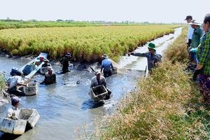 Về vùng nuôi tôm càng xanh lớn nhất Cà Mau
