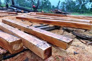 Phá rừng ở Đắk Lắk: 'Nóng' ngay đầu mùa khô