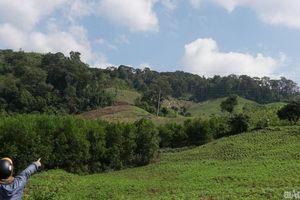 Gia Lai: Mất trên 4.800 ha mới chỉ thu hồi được trên 500 ha