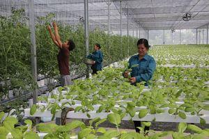 Hà Nội: Nhiều mô hình nông nghiệp công nghệ cao mang lại hiệu quả