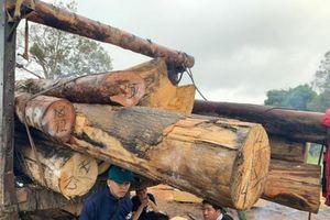 10 người Khánh Hòa sang Đắk Lắk phá rừng bị khởi tố