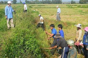 Hà Nội tổ chức chiến dịch diệt chuột bảo vệ sản xuất nông nghiệp, sức khỏe cộng đồng