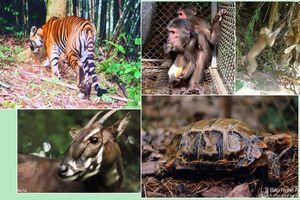 Vườn Quốc gia Pù Mát cứu hộ thành công hàng trăm động vật quý hiếm