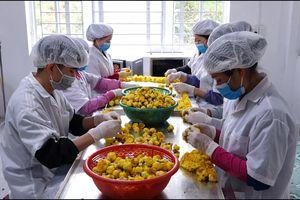 Ứng dụng KH&CN - giải pháp giảm tổn thất sau thu hoạch