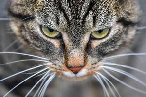 Người đàn ông tại Anh bị buộc tội ngược đãi 16 con mèo