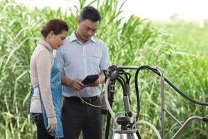 Cô Gái Hà Lan hỗ trợ nông dân Việt Nam hiện đại hóa quy trình nuôi bò sữa
