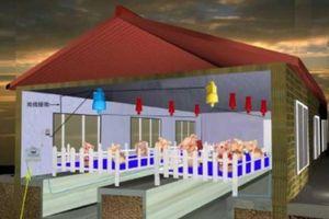 Nhà khoa học hiến kế chống khủng hoảng thịt lợn ở Trung Quốc