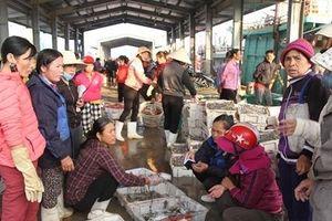 Tăng nguồn thực phẩm thay thế thịt lợn: Hải sản tươi ngon giá không tăng