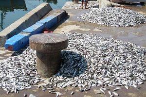 Sáu người ngộ độc do ăn cá nóc