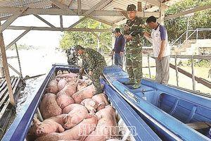Căng mình chặn lợn nhập lậu qua biên giới An Giang