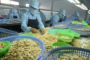 Ngành điều đặt mục tiêu xuất khẩu 4 tỷ USD trong năm 2020