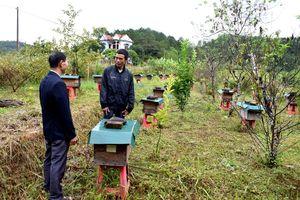 Nghề nuôi ong mật ở Bình Liêu