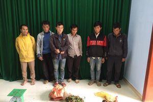 Quảng Nam: Xử phạt các đối tượng khai thác dược liệu trái phép khu vực biên giới