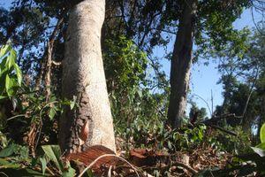 Thanh tra, làm rõ mức độ vụ phá rừng trong Khu bảo tồn Đồng Nai