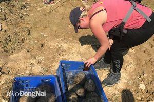 46 cá thể động vật hoang dã được thả về với môi trường tự nhiên
